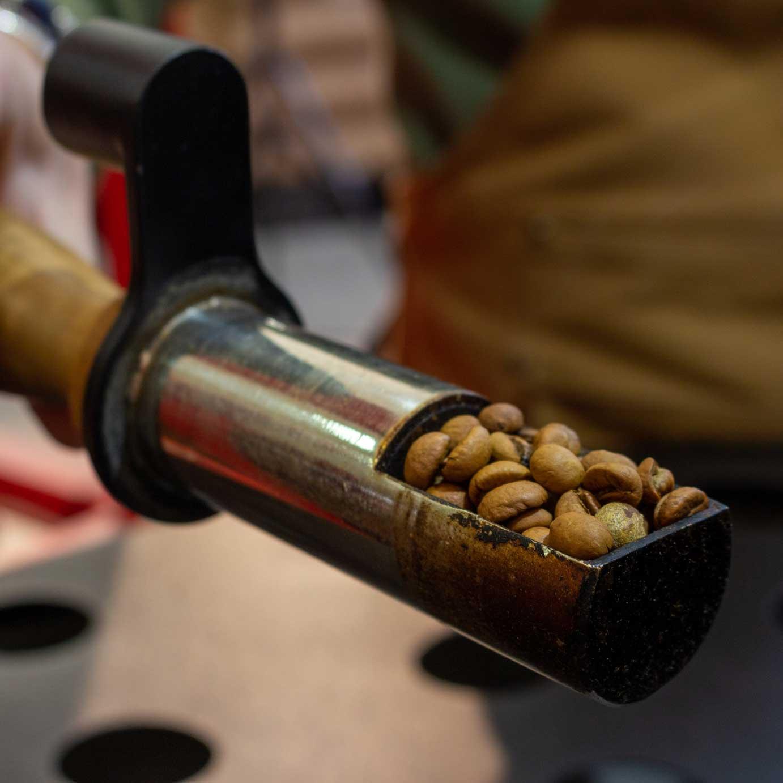 tostatura caffè trinci