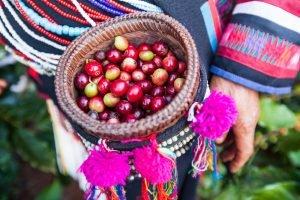 fair trade caffè